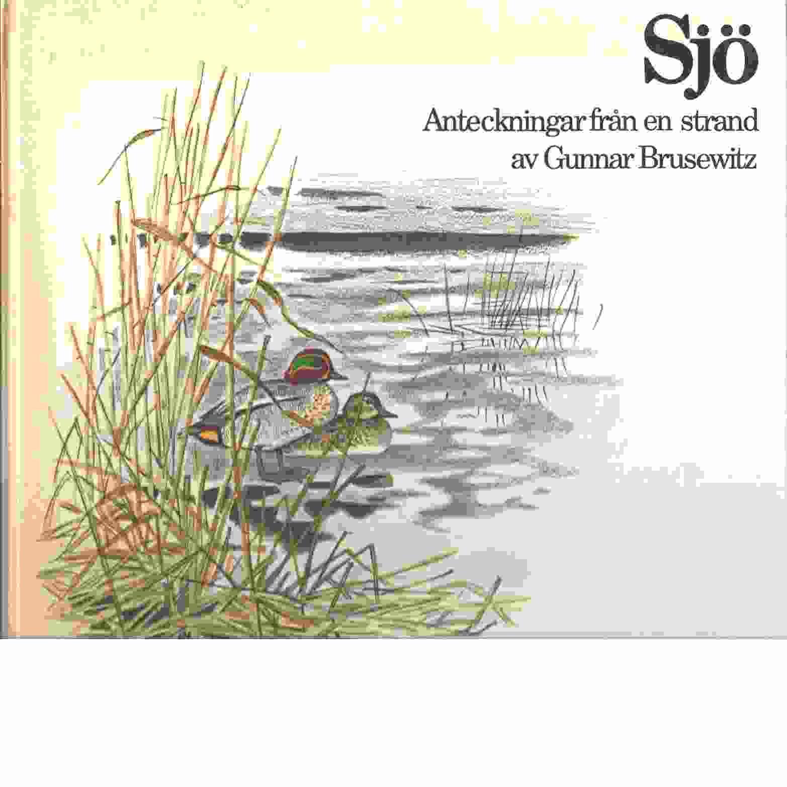 Sjö : anteckningar från en strand - Brusewitz, Gunnar