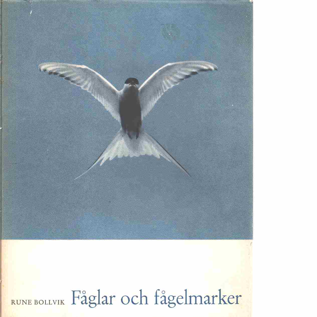 Fåglar och fågelmarker - Bollvik, Rune