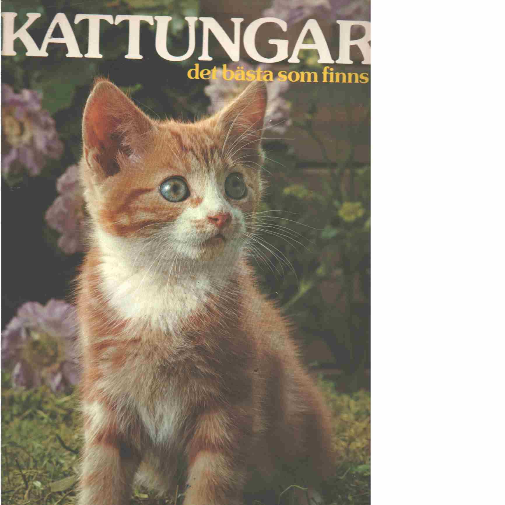 Kattungar, det bästa som finns  - Sayer, Angela