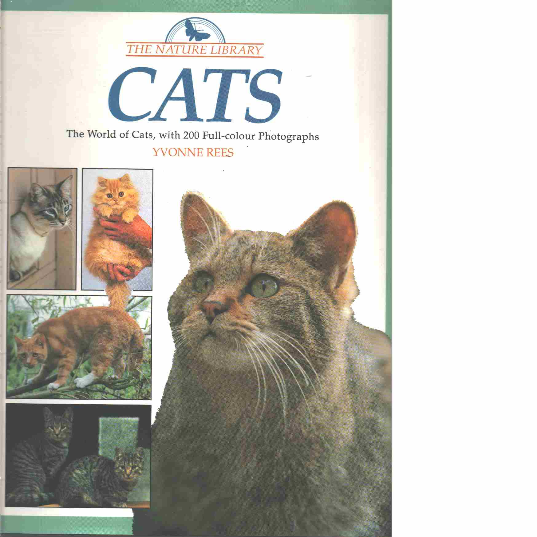 CATS The World of Cats, with 200 Full-colour Photographs  - Rees, Yvonne