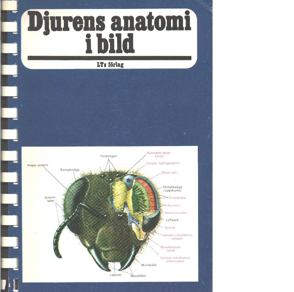 Djurens anatomi i bild  - Red.