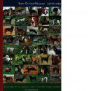 Jakthundar : hur du väljer rätt ras, uppfostrar, jagar in och håller hunden i toppform - Christoffersson, Sten