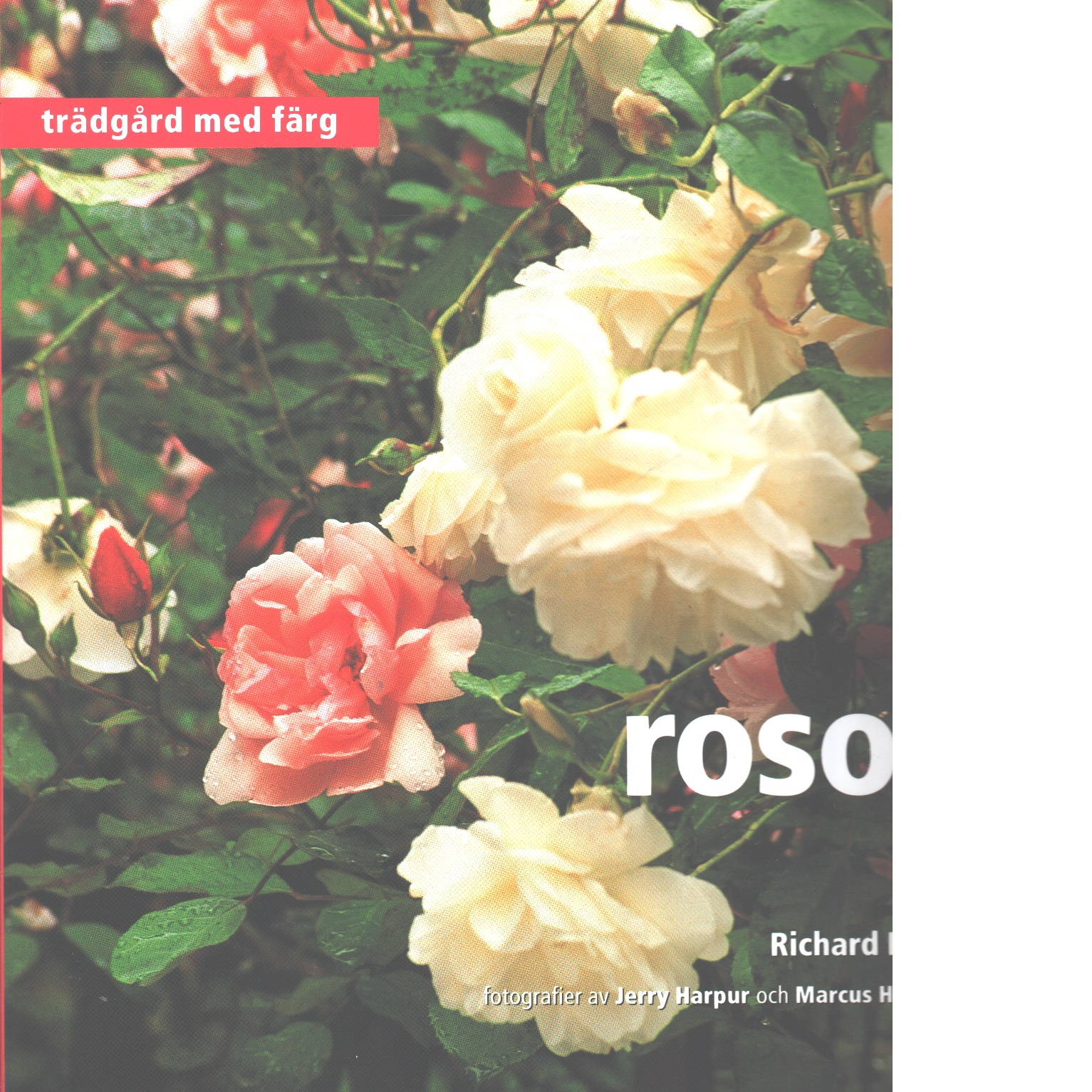 Rosor : Trädgård med färg - Ross, Richard