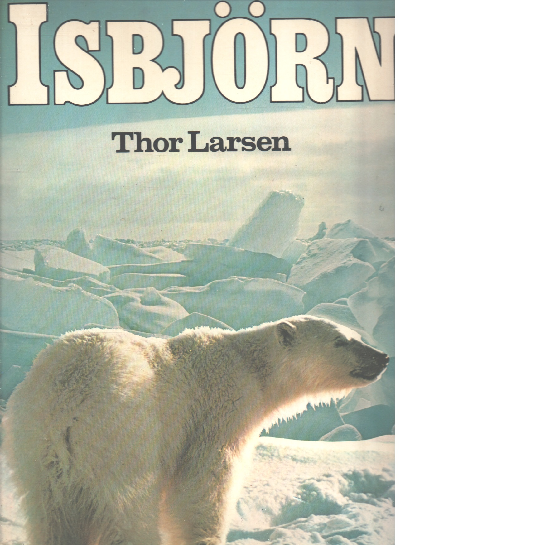 Isbjörn - Larsen, Thor